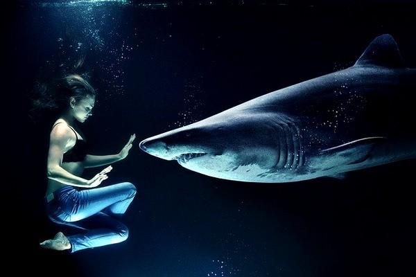 Le squalane en cosmétique, faites le choix du végétal ! La beauté des femmes VS la survie des requins ?