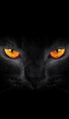 عيون القطة