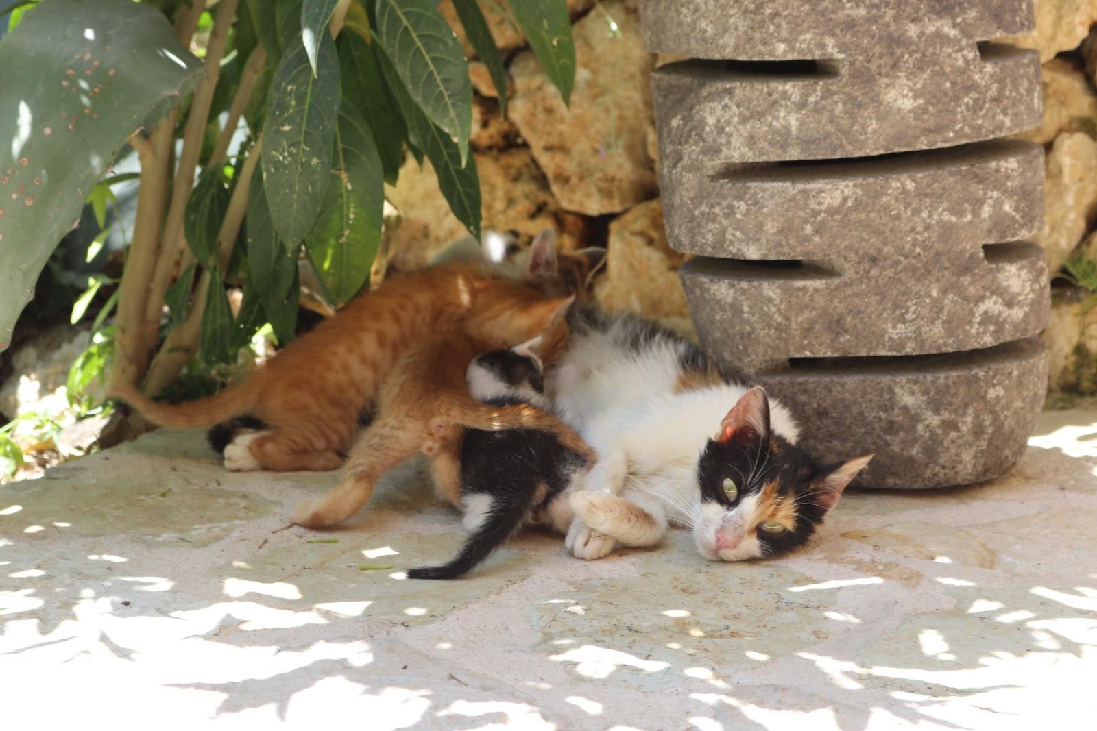kittens and mother, F Zeen Resort, Unique Villas, Kefalonia
