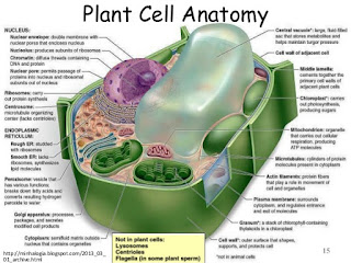 Living World: Plant Cell Anatomy