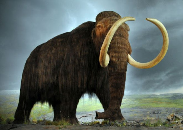 Thanks to a science, reviving an extinct animal for thousands of years will be a reality