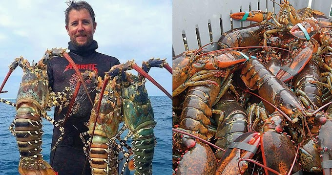 Esposo de Mariela Castro presume de ser un gran pescador de langostas