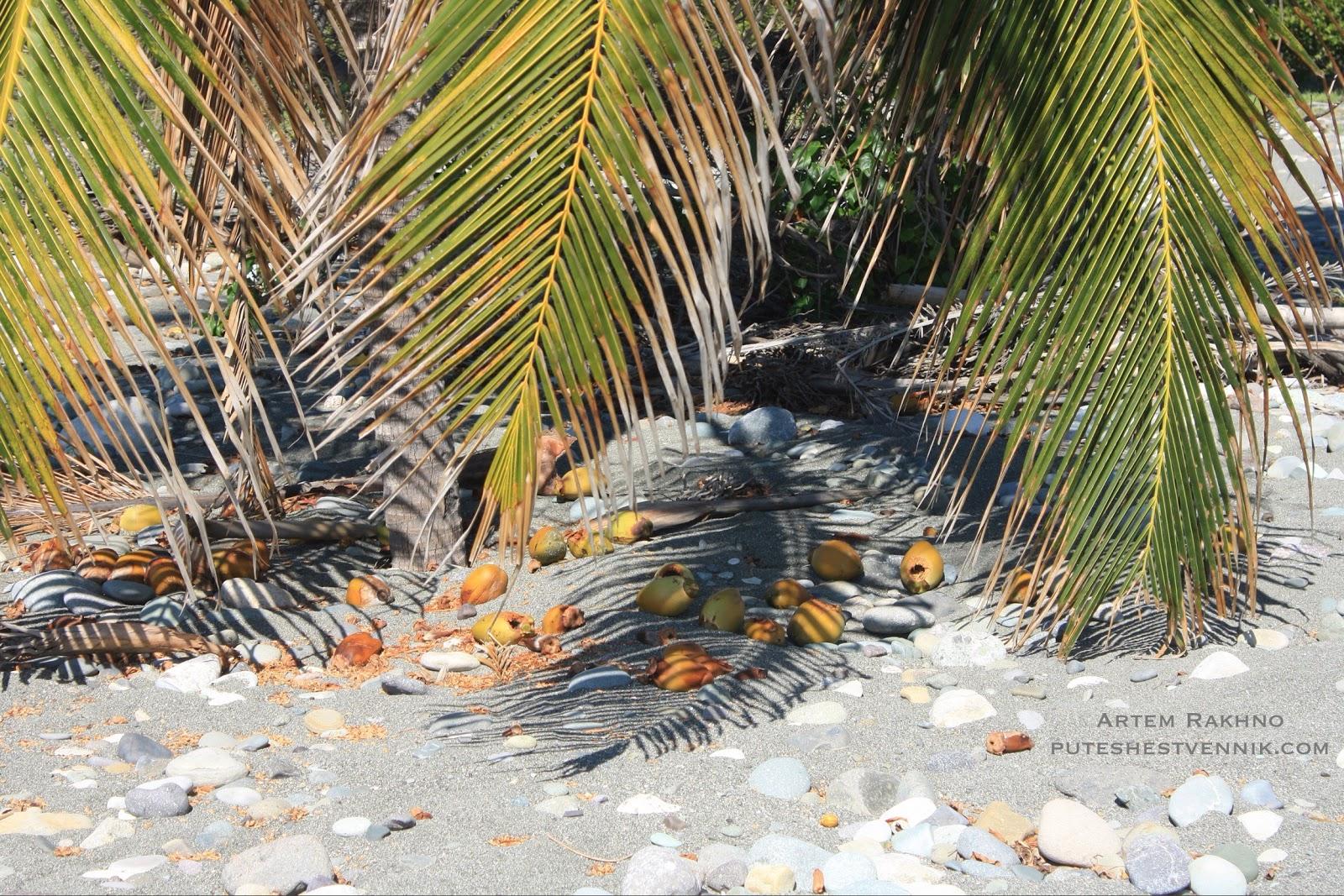 В тени кокосовой пальмы
