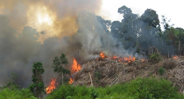 Siti Nurbaya Nyatakan Tidak Ada Kompromi Bagi Pembakar Hutan