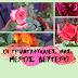 Η συλλογή των Τριανταφυλλιών μας (Μέρος 2ο)