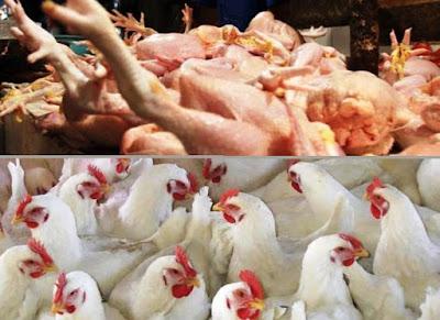 distributor daging ayam Jakarta