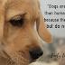 Οι σκύλοι είναι καλύτεροι...