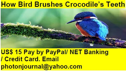 How Bird Brushes Crocodile's Teeth bird story book