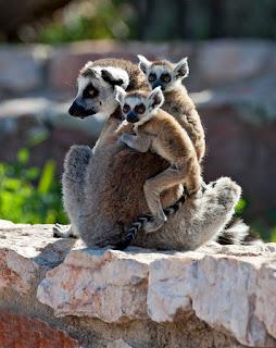 Στα Δύσκολα Μαζί - Kids go free στο Αττικό Ζωολογικό Πάρκο!