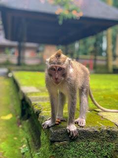 टोपी बेचने वाला और बंदर, cap seller and the monkey