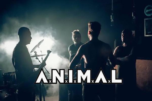 ANIMAL-video-Una-razón-para-seguir
