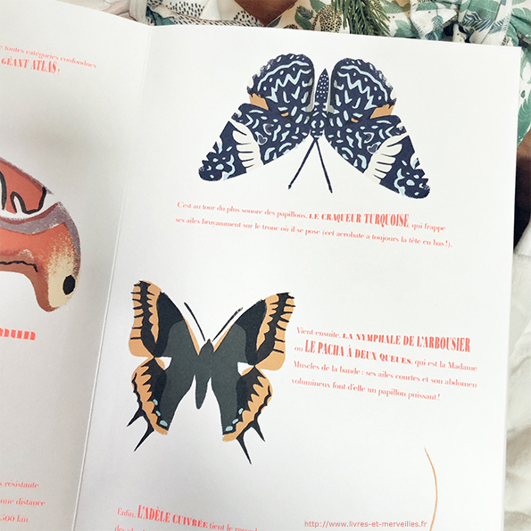 Album pop-up : Papillons illusions