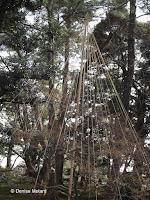 Winter rope protections reaching high - Kenroku-en Garden, Kanazawa, Japan