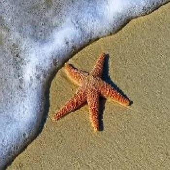 तारा मासा, Starfish name in Marathi