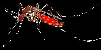 Nyamuk adalah serangga berbahaya yang dapat menimbulkan penyakit mematikan