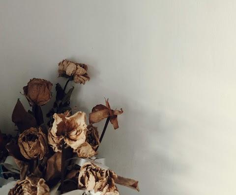 CUENTO No me regalen flores | Shaila Pineda