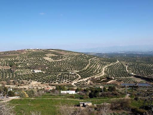 Imagen de los cerros de Úbeda, como no podía ser de otra manera.