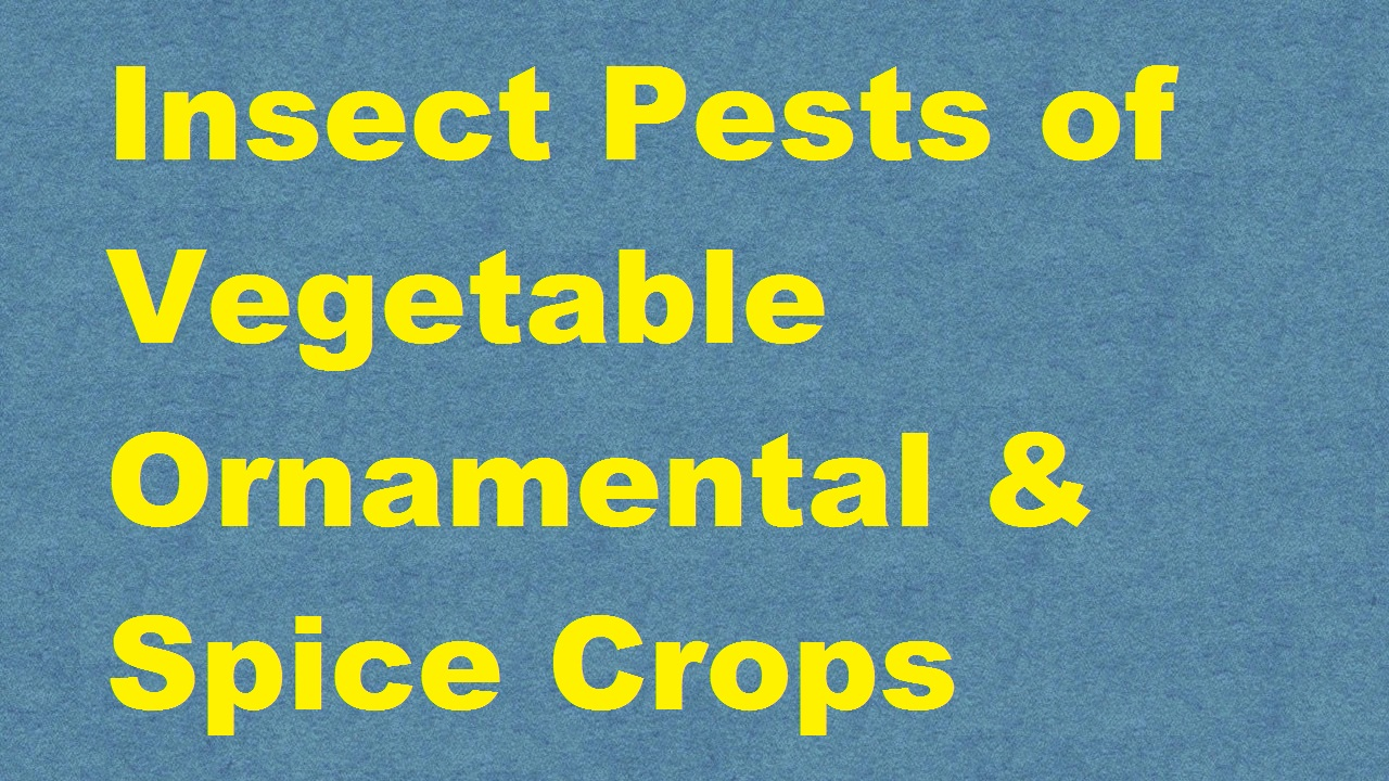 Insect Pests of Vegetable Ornamental and Spice Crops ICAR E course Free PDF Book Download e krishi shiksha