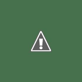 Alaycı Kuş - Suzanne Collins PDF İndir