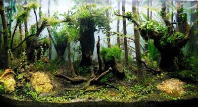 Aquascape Hutan Jungle