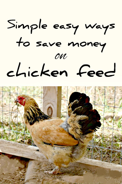 Save money on chicken feed with these cheap and free methods.