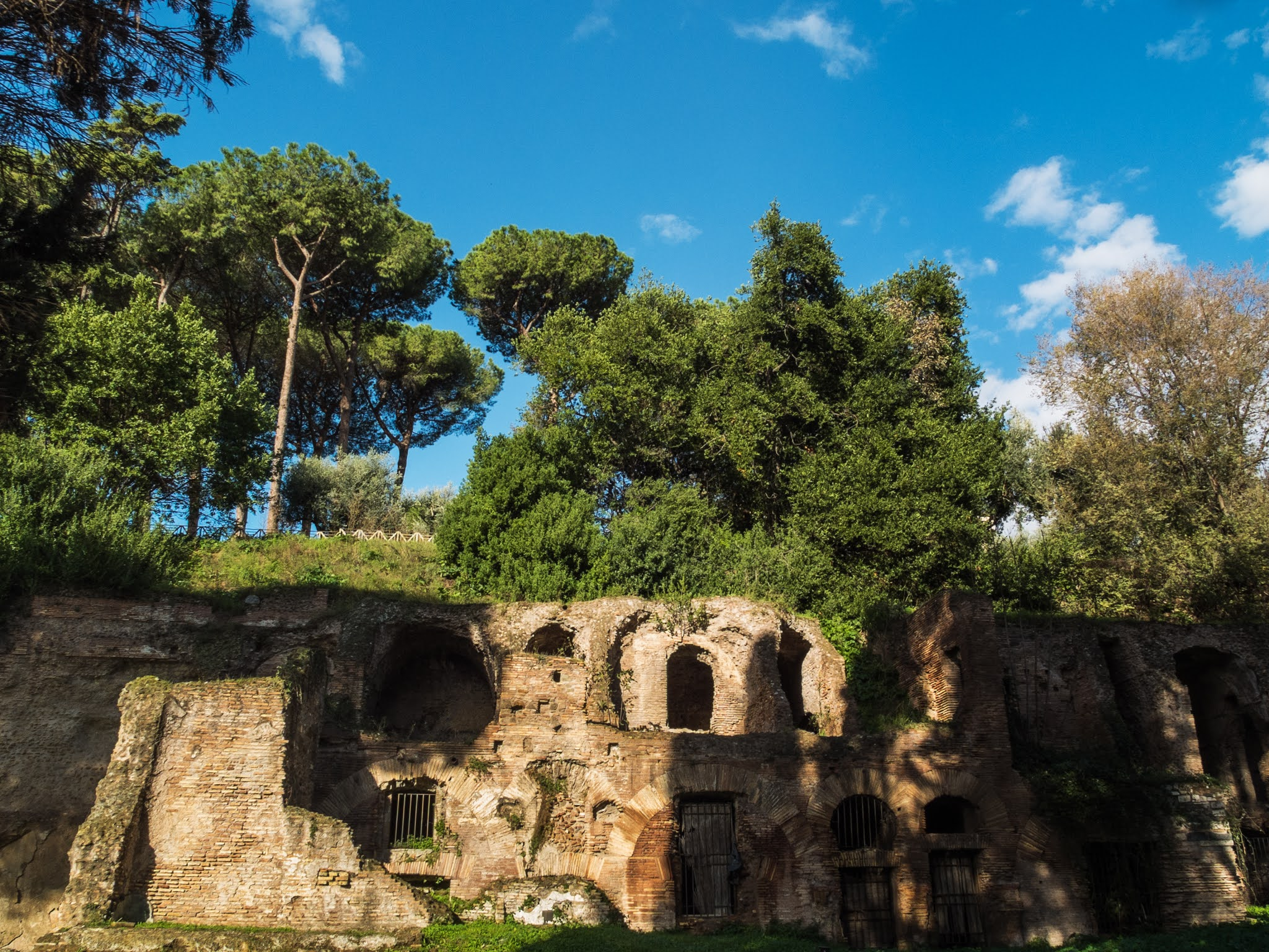 Umbrella pines above red brick ruins on Palatine hill on a sunny day.