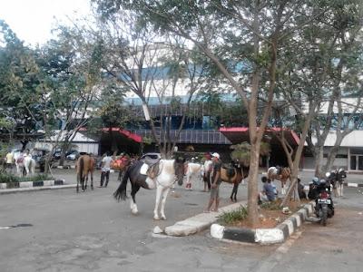 Asyiknya Naik Kuda Di Pacuan Kuda Pulo Mas 5
