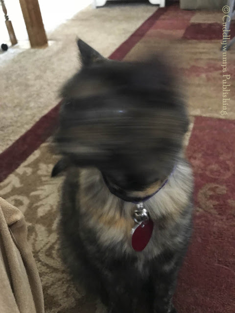Real Cat Paisley with blurry head