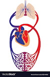 Types Of Heart Diseases That You May Not Know