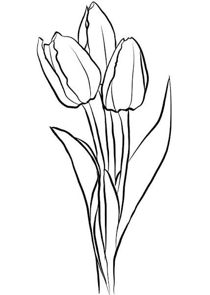 Tranh tô màu ba bông hoa Tu lip đơn giản