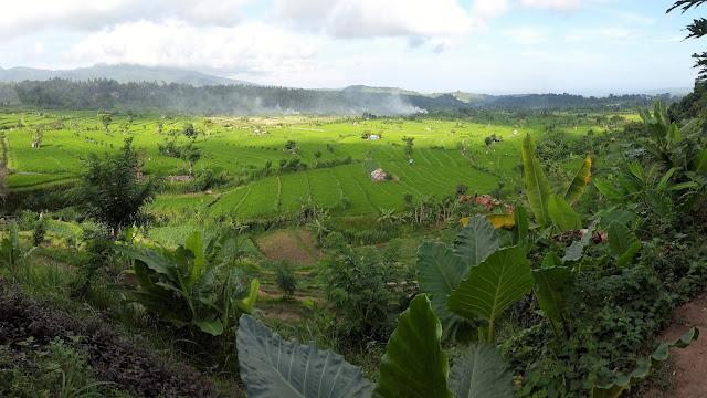 Reisfelder Amed