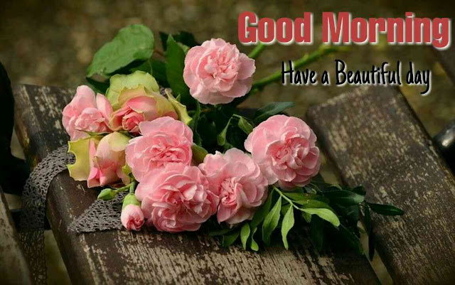 beautiful good morning with pink rose flowers have a nice day