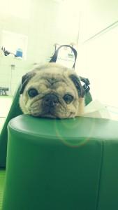 aparelho para descanso de cães com mobilidade reduzida