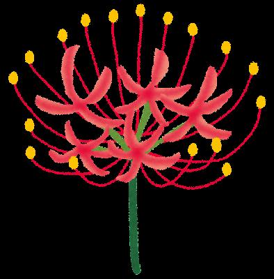 彼岸花のイラスト(花)