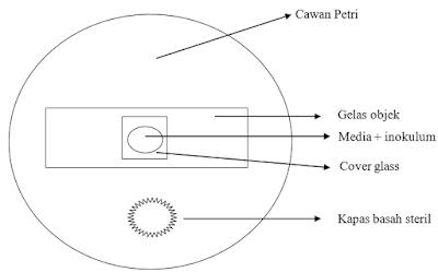 Henrici's cultur slide, metode Henrici's cultur slide, Praktikum Mikologi : Teknik Kultur Slide pada Jamur (Teknik Henrici's cultur slide)