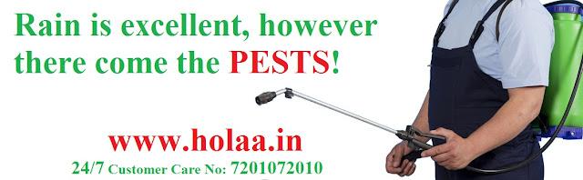 Pest Control Service in Surat
