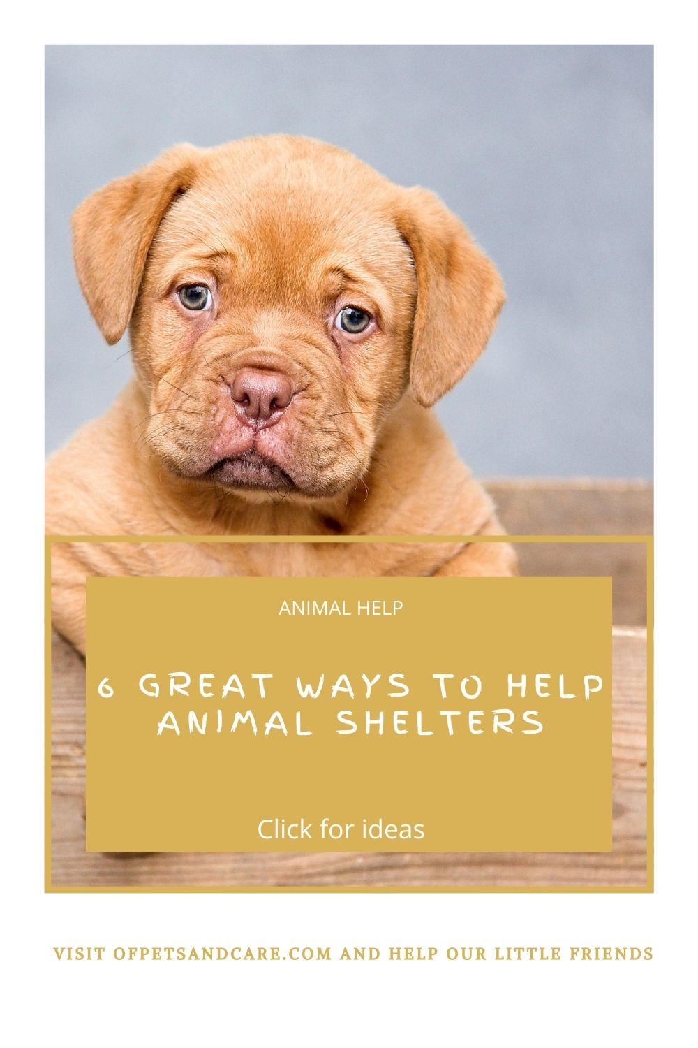 6 Great Ways To Help Animal Shelters