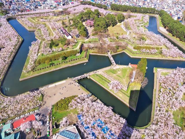 Fortezza Goryokaku con Ciliegi in Fiore