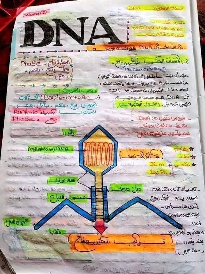 اقوي ملخص DNA تالته ثانوي 4