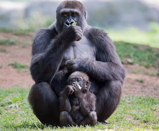 Mother animal and baby bonding