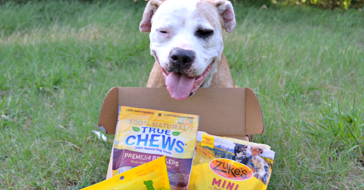Goody Box Made in the USA for Dogs by Chewy.com #ChewyInfluencer