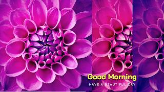 dhaila flower good morning images