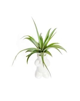8 Plantas para ter no banheiro