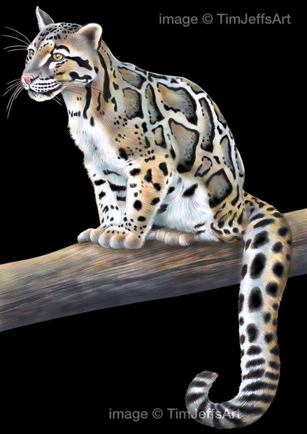 clouded leopard paper term Naples zoo welcomes two rare, young clouded naples zoo welcomes two rare, young clouded leopards paired these two for the long-term genetic viability of.