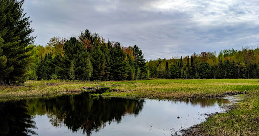 Beaver pond and mix of pine and hardwood trees in the distance