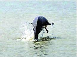 Image showing a Dolphin in fresh water
