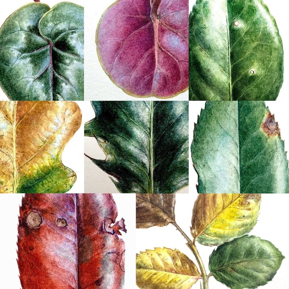 Leaf Challenge: Regular Painting is Good for the Soul
