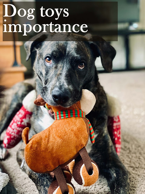 Dog toys importance and role in dog development