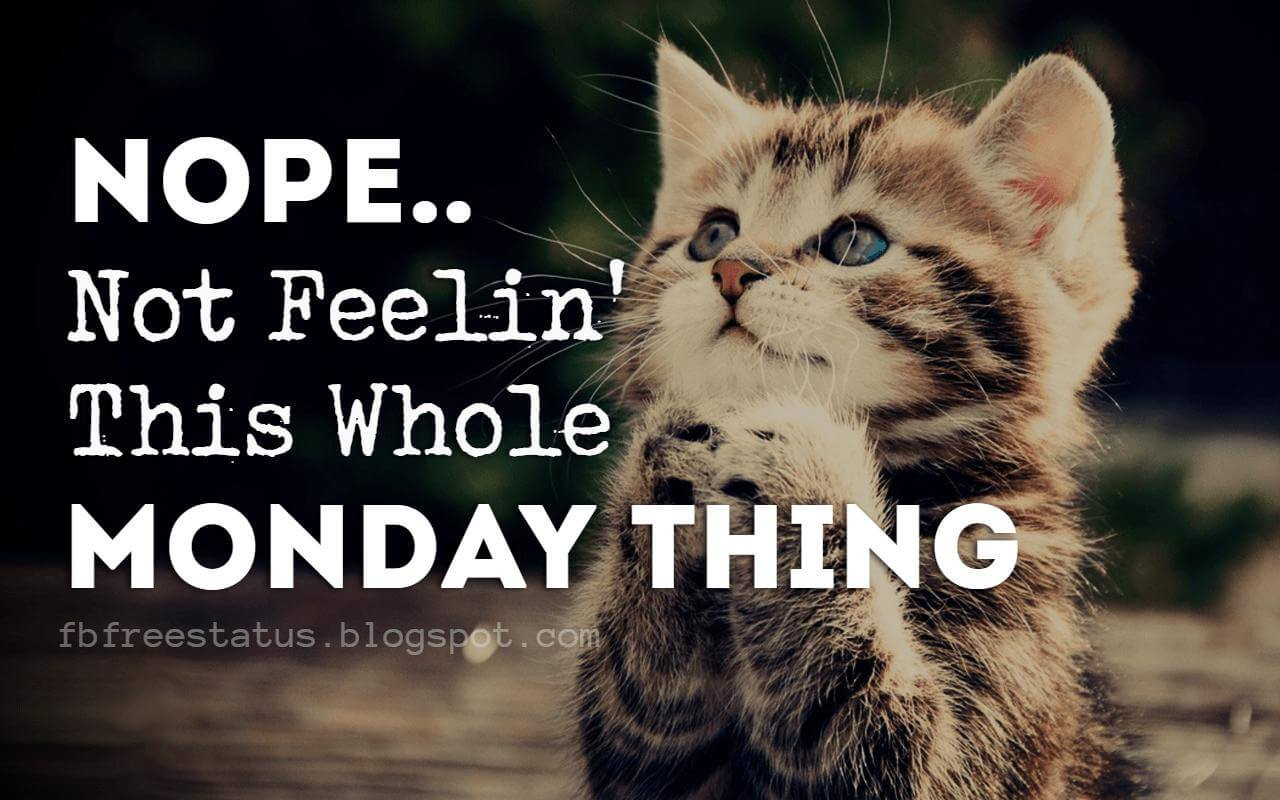 Happy & Funny Monday Quotes to Make You Smile