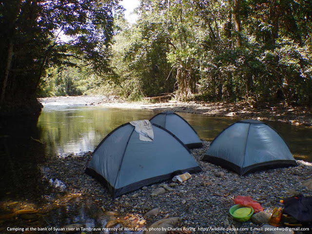holiday tour in West Papua's rainforest